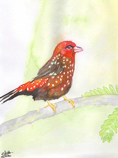 Dessin original Oiseau