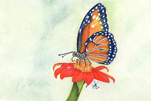 Dessin crayon de couleurs/aquarelle papillon