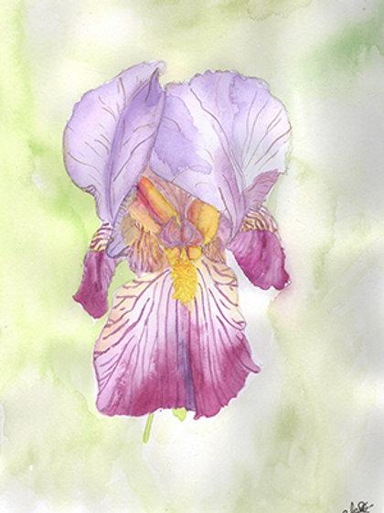 Dessin original Iris