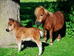 Twinkle with her last foal, Plumtree Little Sweetie