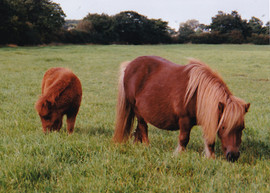 Twinkle with one of her foals