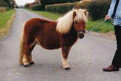 Plumtree Patrick as a weaned foal