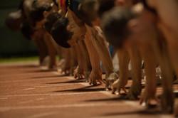 אליפות ישראל בריצה