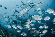 El bienestar de animales marinos es clave para los Objetivos de Desarrollo Sostenible, según reporte