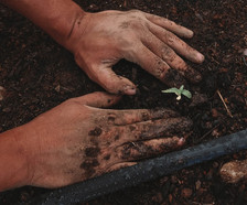 Para alimentar a una población de 10 mil millones para 2050, reporte recomienda comer más vegetales