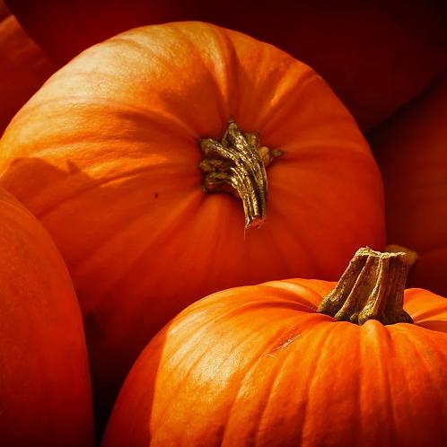 Halloweenpumpa 'Howden'