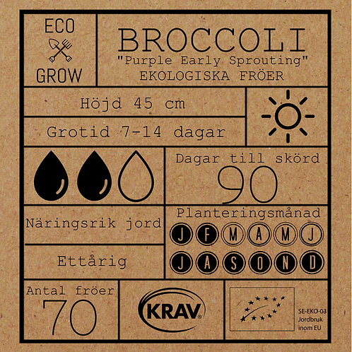 """Broccoli """"Purple Early Sprouting"""""""