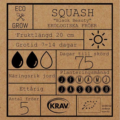 "Squash ""Black Beauty"""