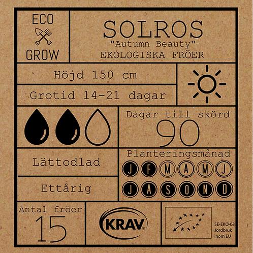 "Solros ""Autumn Beauty"""