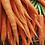 Thumbnail: Vintermorot 'Autumn King 2'