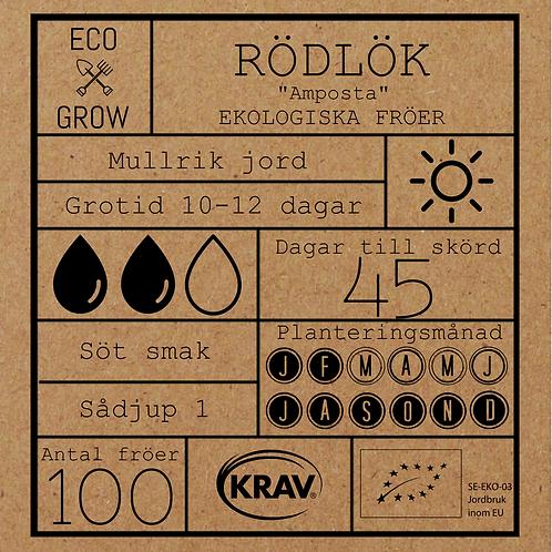 """Rödlök """"Amposta"""""""
