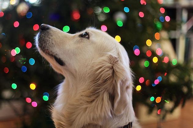 5 Ways To Dog Proof Your Christmas Tree This Season   DWalk