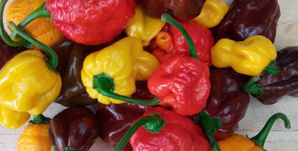 400g Mixed hot/super hot chilli selection