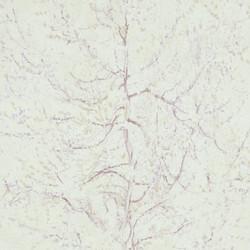 17162.jpg