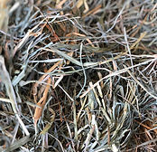 Orchard Mix Hay