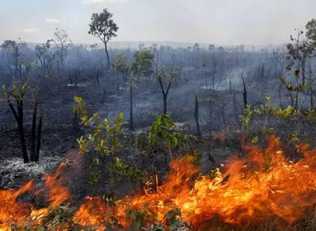 Déforestation en Amazonie : les acteurs (4).
