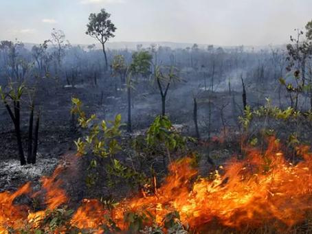 Déforestation en Amazonie : les acteurs (3).
