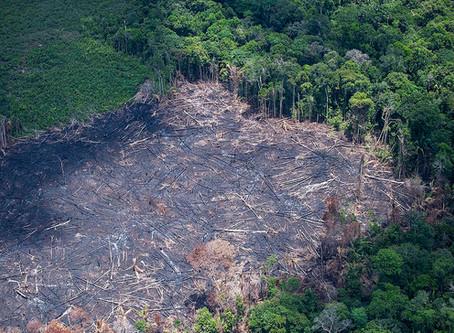 Déforestation en Amazonie : l'histoire (3).