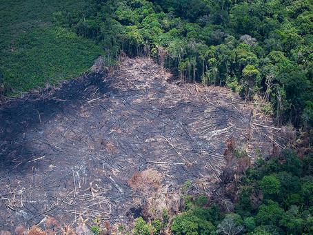 Déforestation en Amazonie : l'histoire (1).
