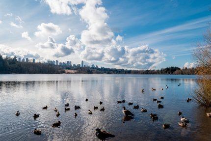 会议举办地元素酒店附近的鹿湖公园,都市与自然完美融合