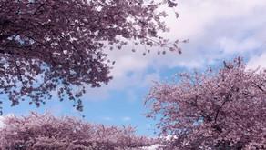 春暖花开,你过敏了吗?其实中医有妙招