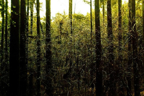 A Short History of Japan's Suicide Forest
