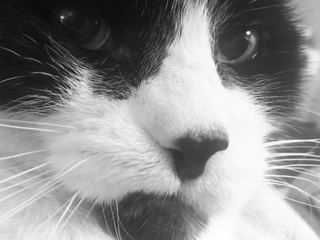 My Cat Knew I Had Cancer (as published on Fireflysisterhood.org)