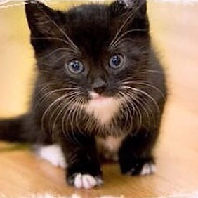 В самые добрые ручки котята около 2 х ме