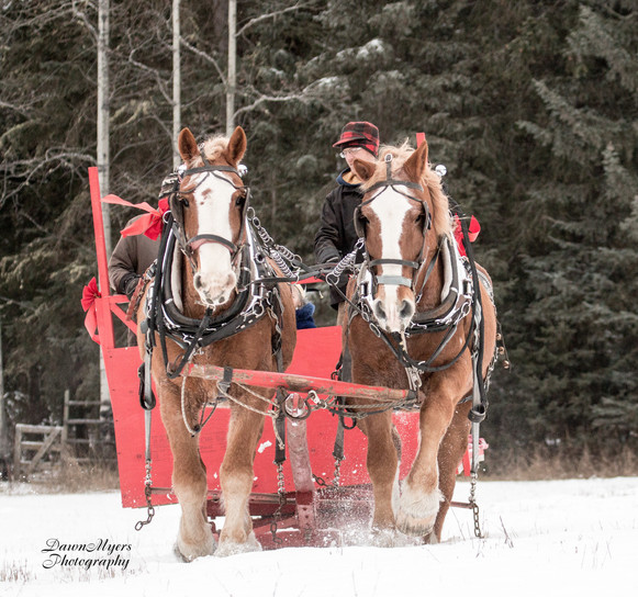 Dawn Myers Cariboo Sliegh-Ride.jpg