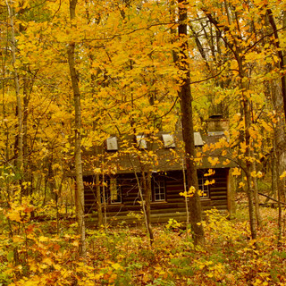 Cabin In The Woods, Ryerson Conservation Area, Riverwoods, IL
