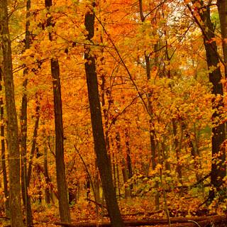 Ryerson Conservation Area, Riverwoods, IL