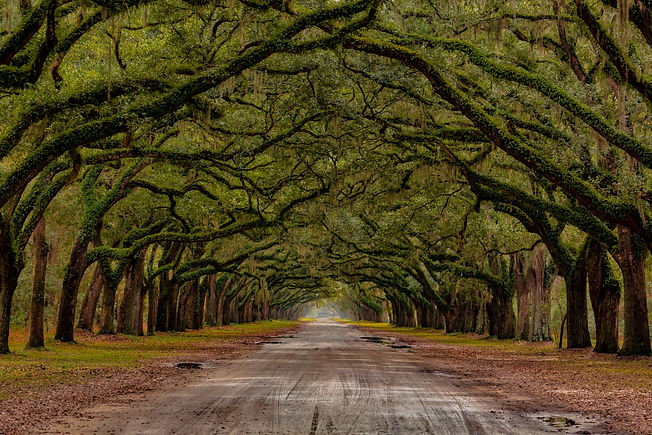Wormsloe Plantation Road_final WIX.jpg