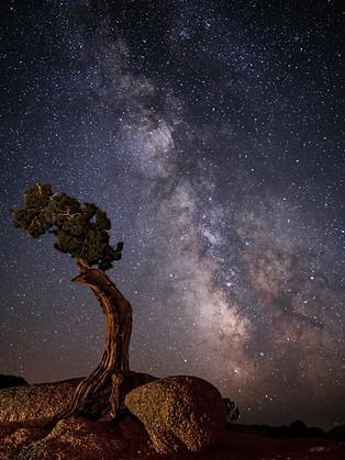The Milky Way at J-Tree NP