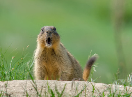 Does your life feel like Groundhog Day? 3 simple ways to get unstuck