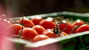 Tomaten als Bild für die Rubrik Saucen