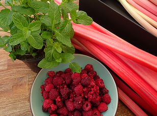 Zutaten für Fruchtaufstrich: Rhabarber, Himbeeren, Minze