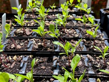 Planting from Seed: How do I start seedlings?