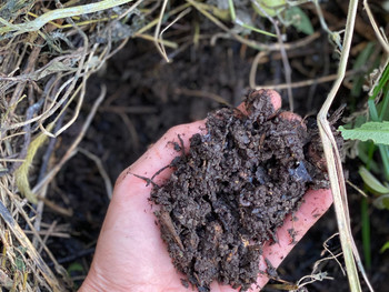 The Simplest Compost
