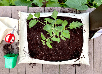 Garden in a Bag! Low-Cost Minimal-Space Gardening