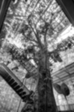 ramon arbol.jpg
