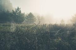 marco-wichert-fotografie-berlin-natur-he