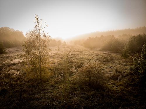 marco-wichert-fotografie-berlin-natur-dr