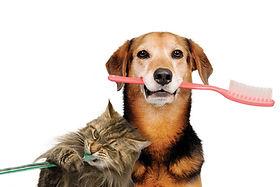 medial-dental-health-dog-cat-brushing-te