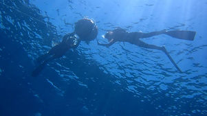 Freediving club and courses