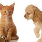 House call veterinarian in ann arbor