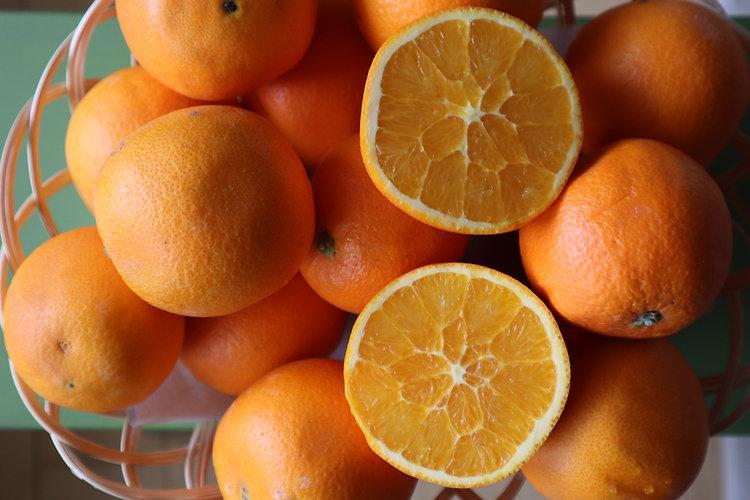 ネーブルオレンジ.JPG