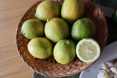 広島産無農薬レモン 2kg詰め
