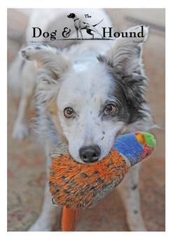 dog and hound