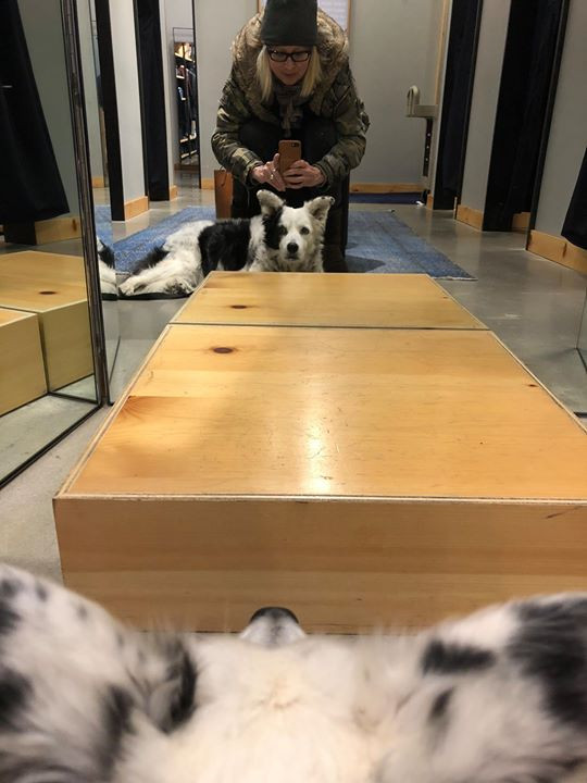 Took Chaser the Border Collie shopping w