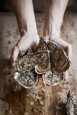 Composition of freshly caught sea oyster